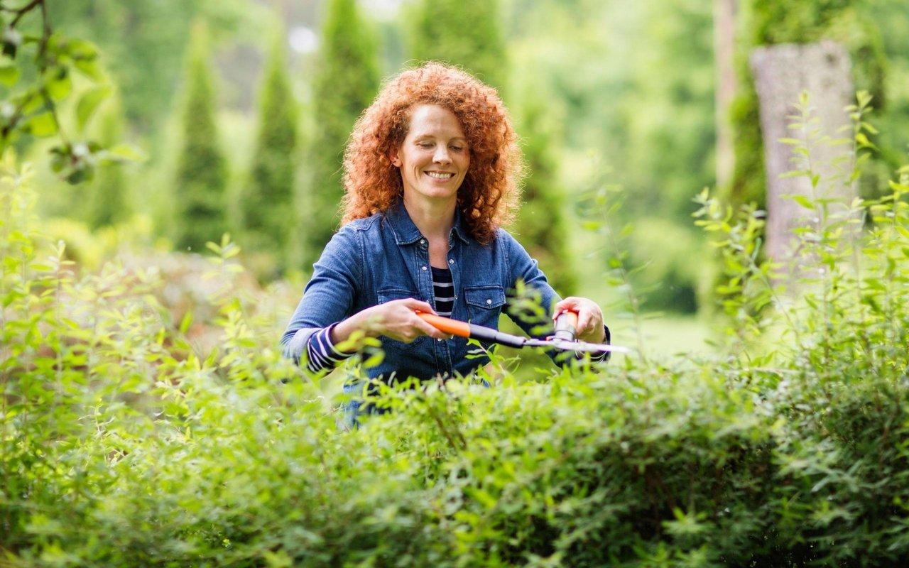 Jardinar