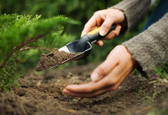 Dele a sus plantas nuevas un buen comienzo