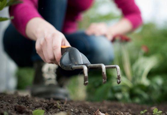 Plante ahora para obtener color y sabor