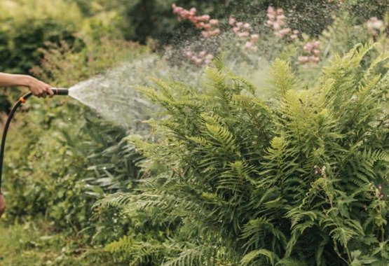 Elija las plantas adecuadas para su clima